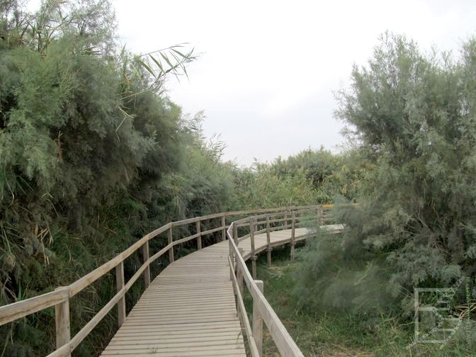Azraq Marsh Trail