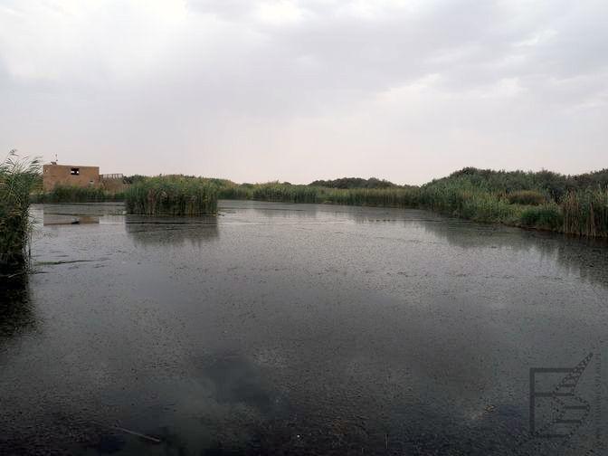 Rezerwat Azraq