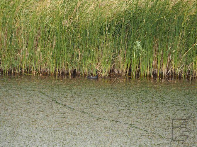 Rezerwat Azraq Wetland