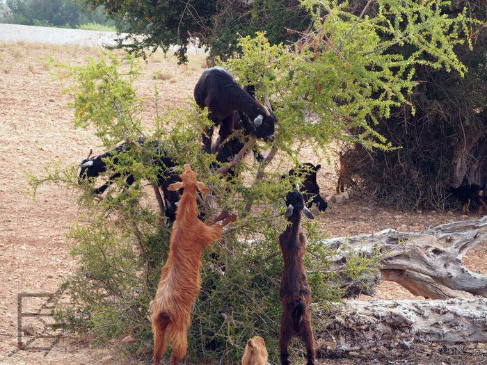 Kozy na drzewach