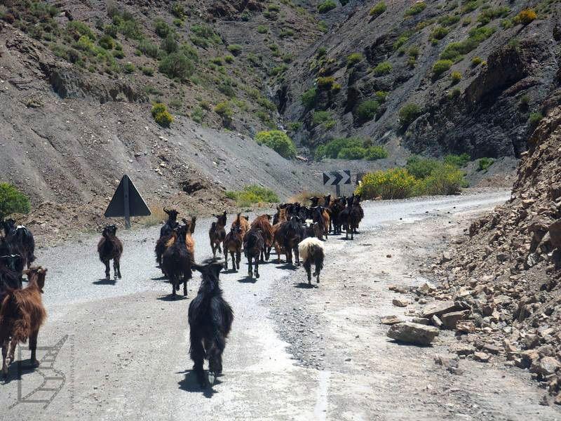 Kozy na trasie