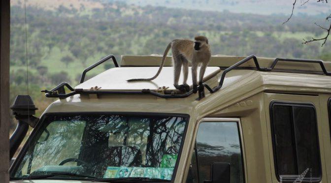 Jak wygląda tanzańskie safari?