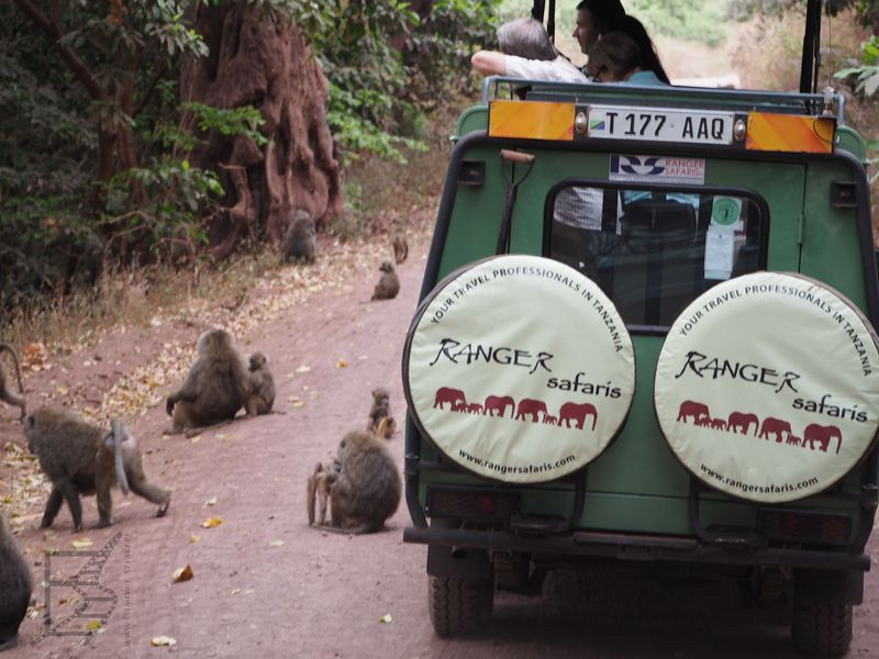Małpy w parku jeziora Manyara