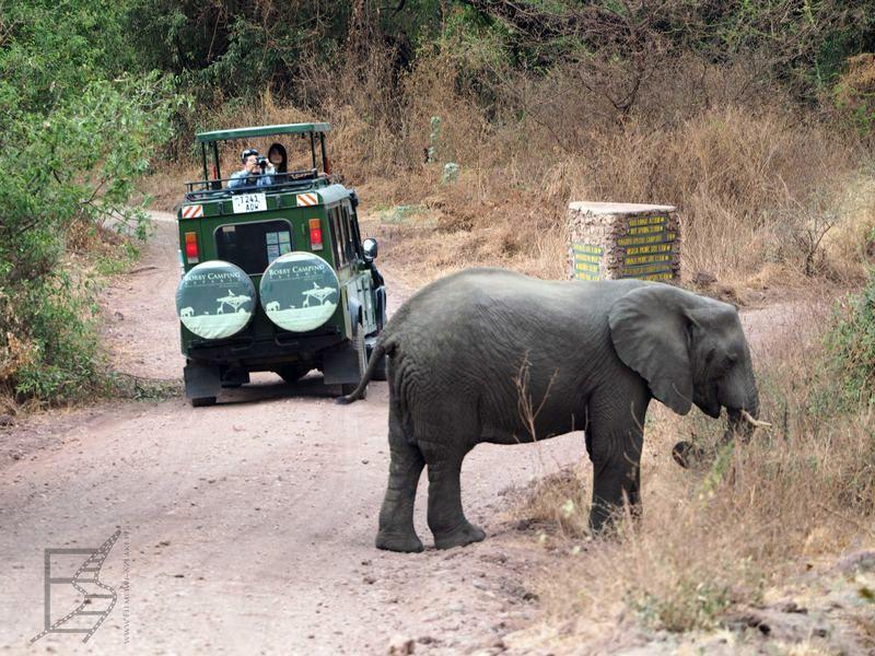 Słonie w parku jeziora Manyara