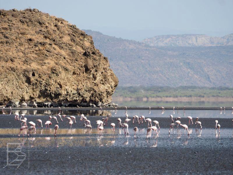 Flamingi nad jeziorem Natron