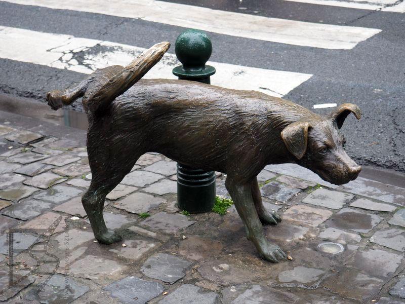 Sikający pies