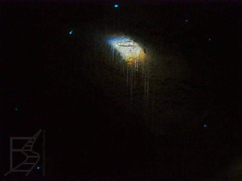Podświetlone świecące robaki