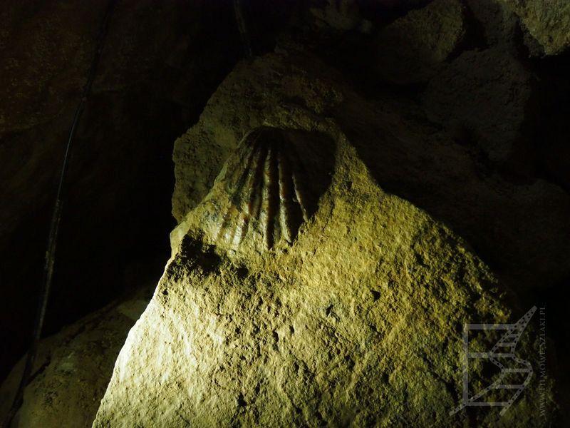 Skamieniałości z czasów, gdy te tereny były pod wodą