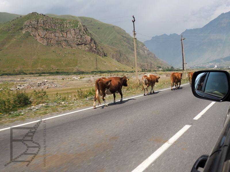 Gruzja, więc nie mogło zabraknąć krów na drogach