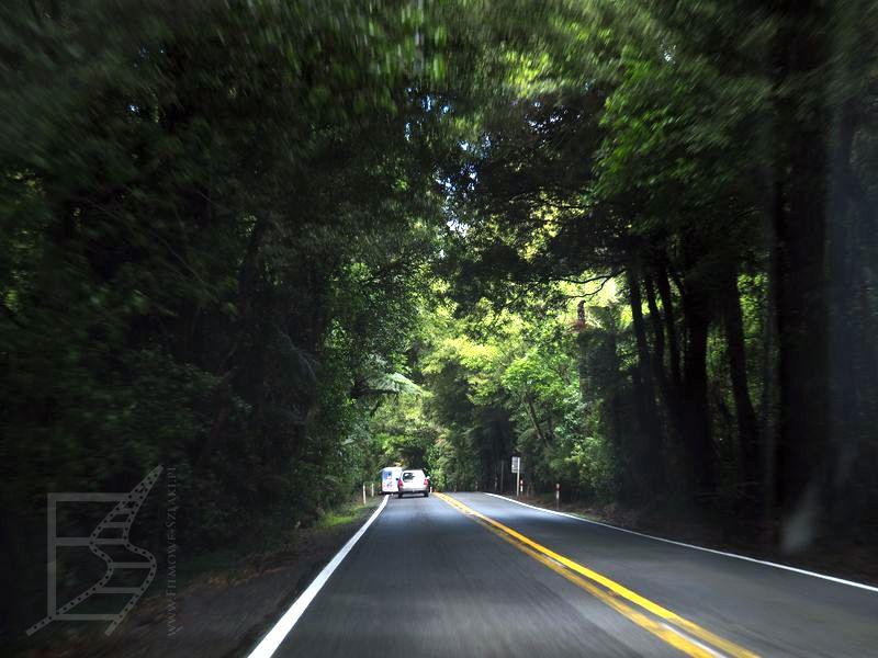 Droga przez las okolice Rotoruy