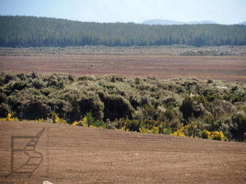 Pola i bagna wykorzystywane przez ekipę Petera Jacksona