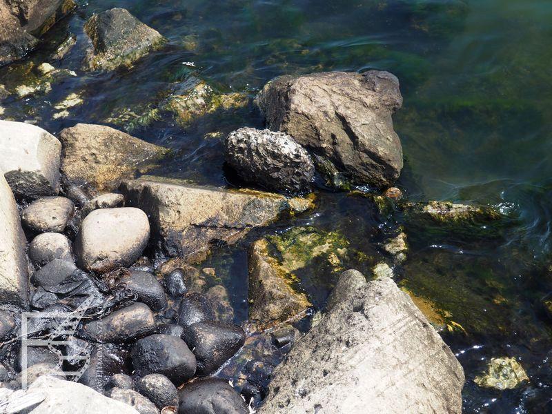 Morze i ropa przy bulwarze