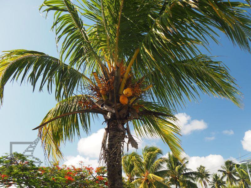 Jedna z wielu palm