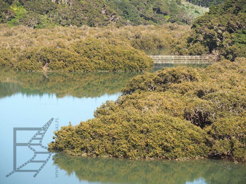 Las namorzynowy w Paihia