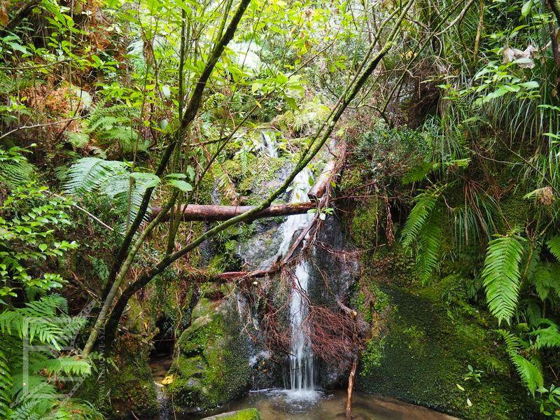 Wodospad pośród lasu