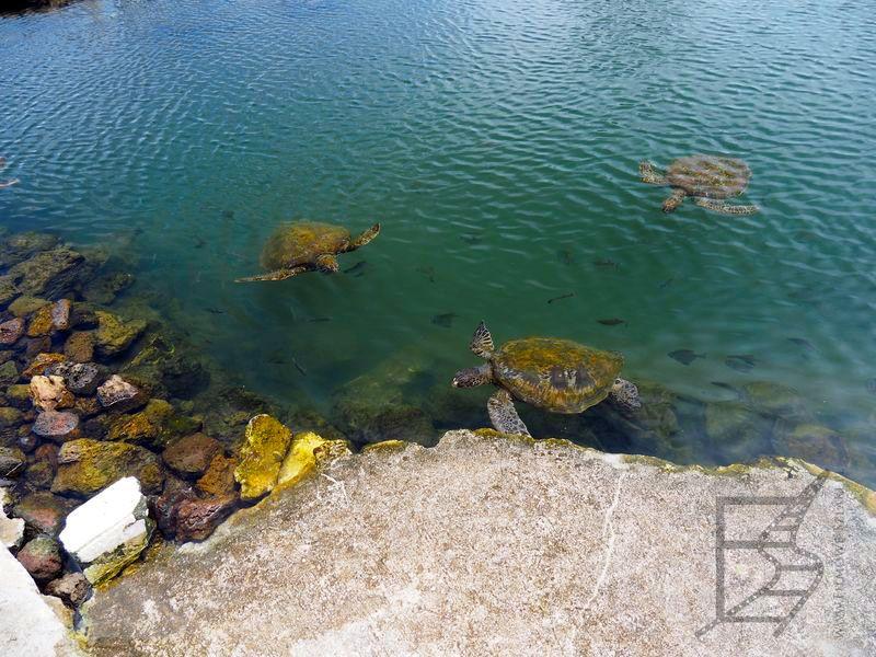 Zatoczka z żółwiami