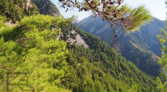 Wąwóz Samaria, najdłuższy wąwóz Europy (Kreta)