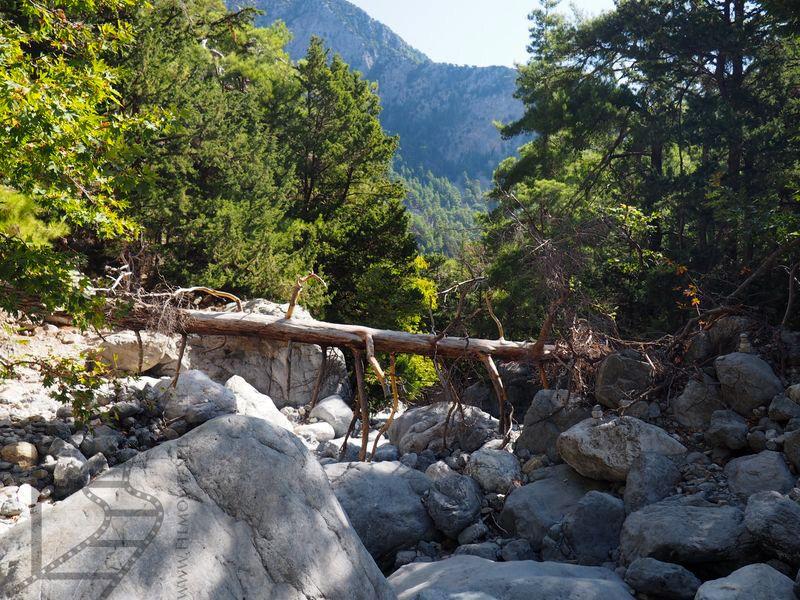 Kamienie i zwalone drzewo