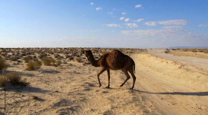 Tunezja: Praktycznie