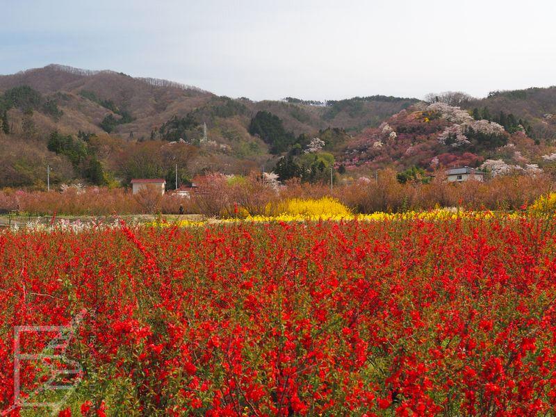 Okolice Hanamiyama Park