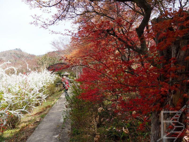 W Parku Hanamiyama jest kilka tras do oglądania kwiatów