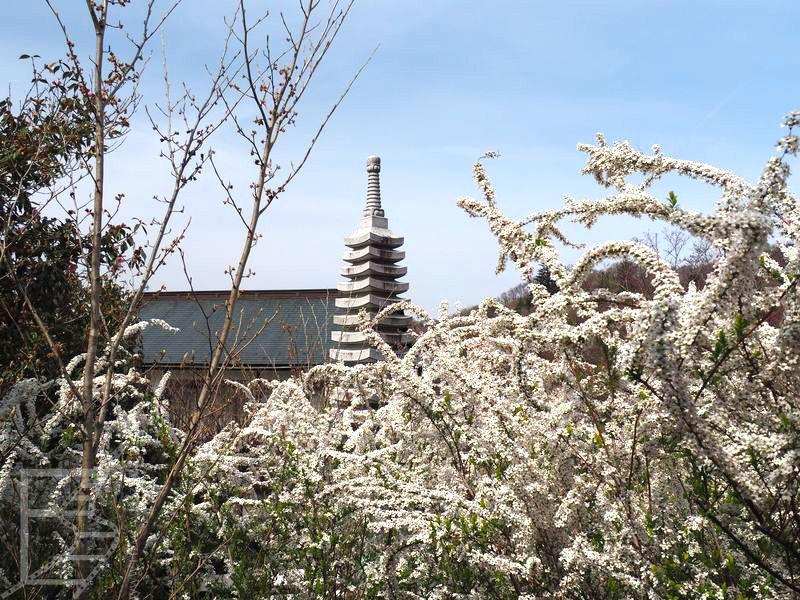 Park Hanamiyama
