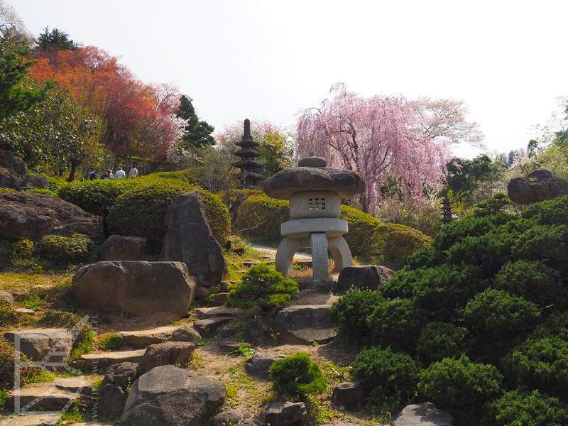 Park Hanamiyama w Fukushimie