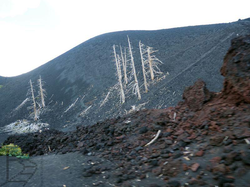 Las zniszczony przez lawę