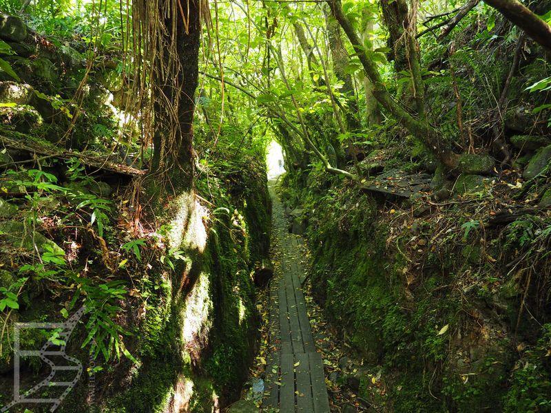 Ścieżka przez las