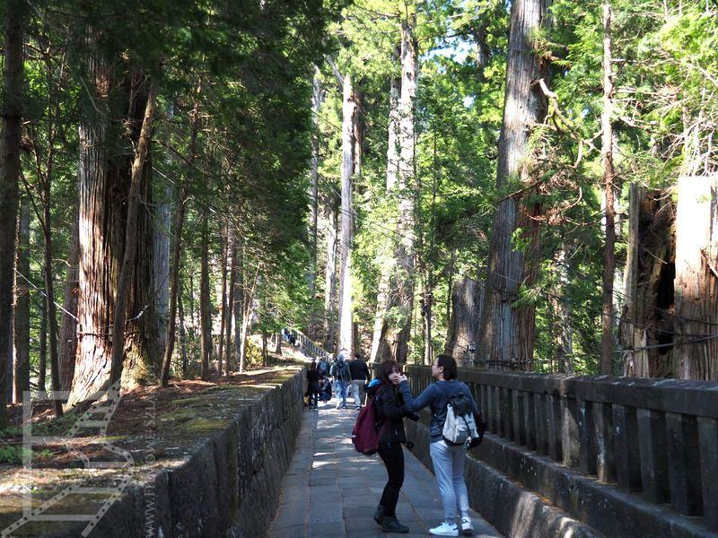 Droga do mauzoleum Tokugawy między cedrami