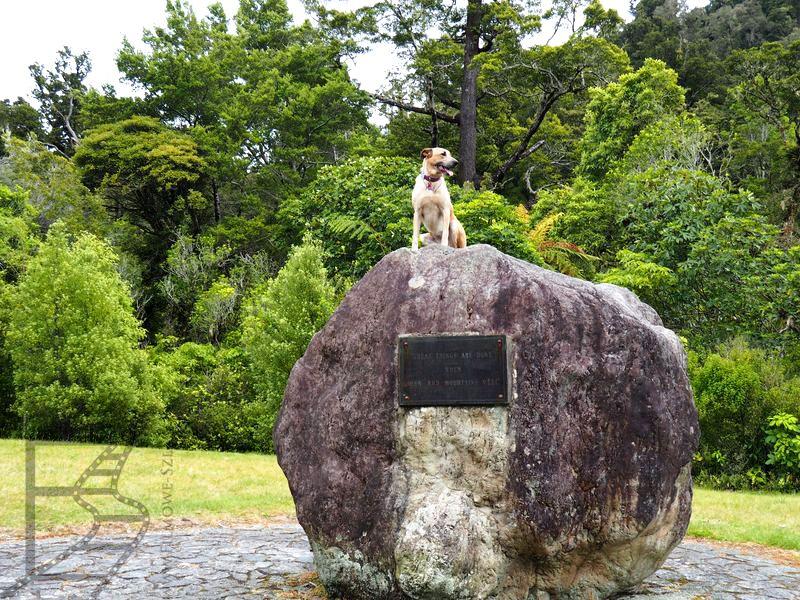Ścieżka spacerowa w Kaitoke Regional Park
