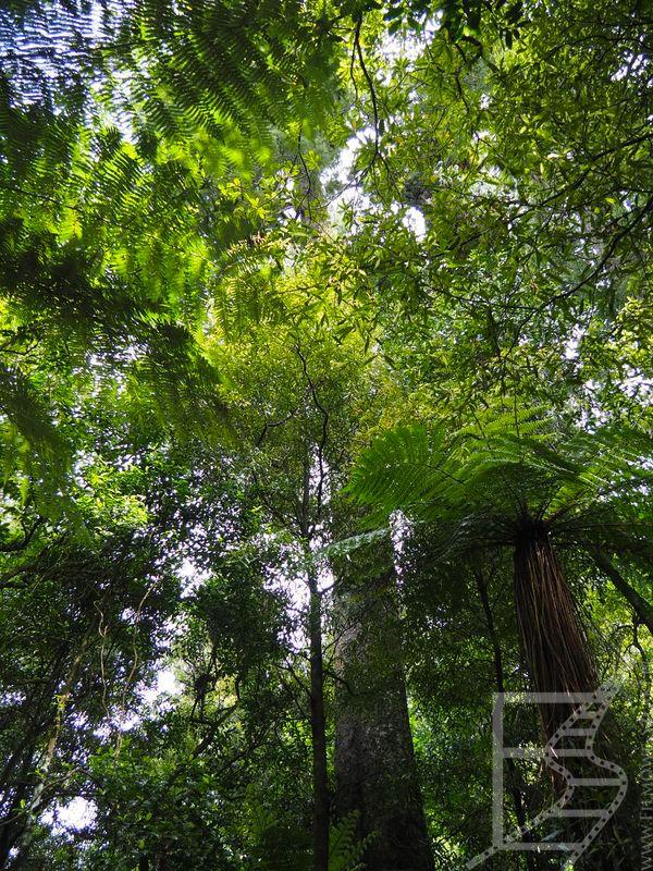 Paprocie drzewiaste w parku