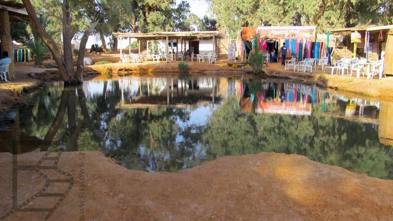 Jeziorko w oazie (Ksar Ghilane)