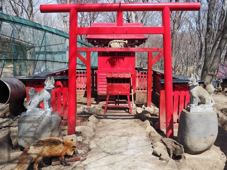 Świątynia Inari w wiosce lisów