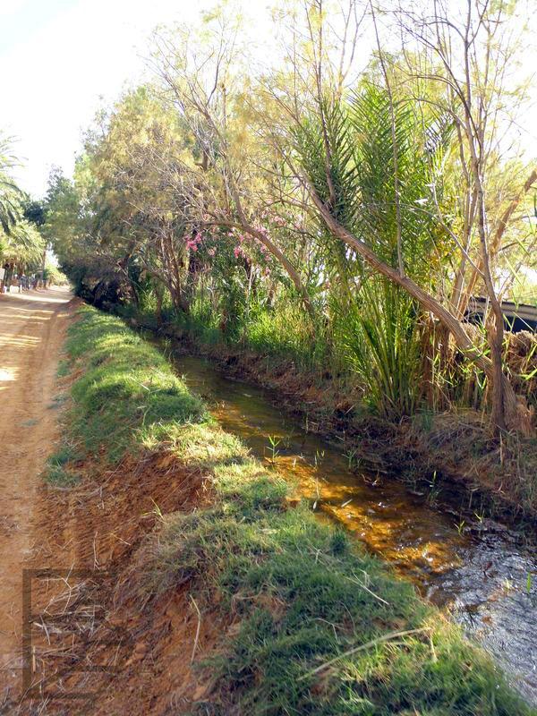 System irygacyjny w oazie Ghilane