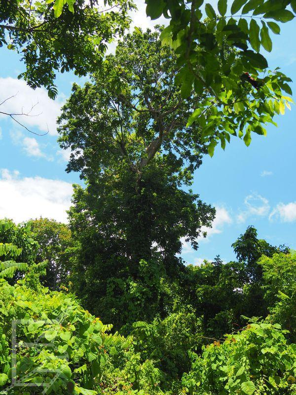 O le Pupu Pue National Park