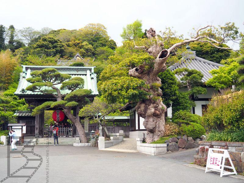 Ogrody w Hase-dera (Kamakura)