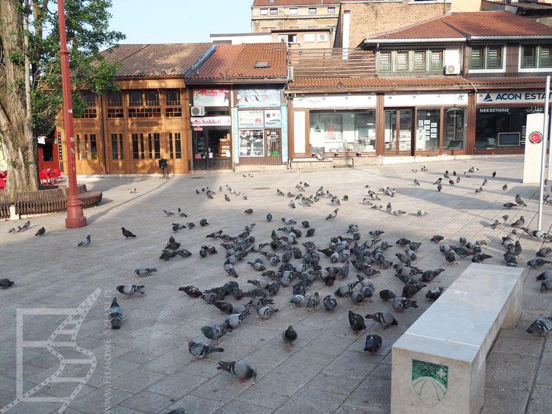 Gołębie na Bascarsiji (blisko Sebilj), Sarajewo