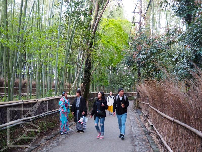 Las bambusowy Arashyiama w Kioto