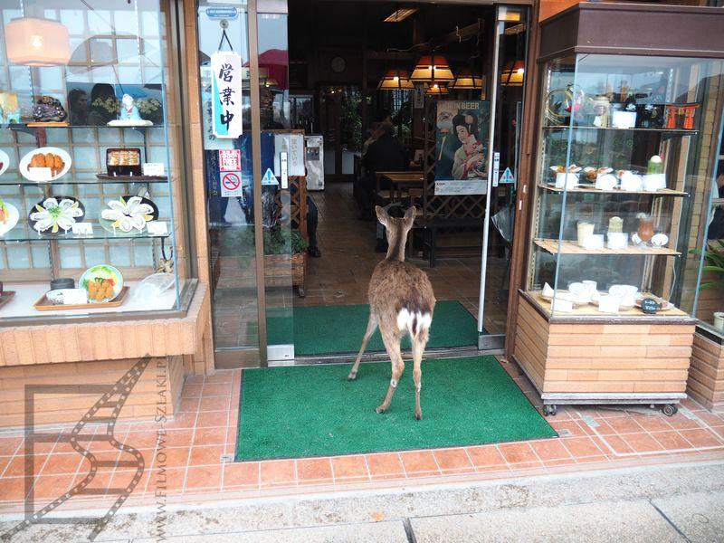 Jeleń sika zakrada się do sklepu