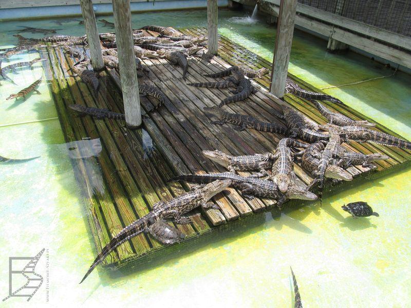 Gatorland (Orlando)