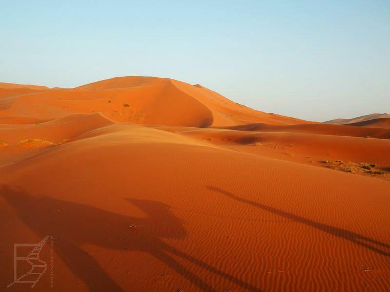 Cienie wielbłądów (pustynia Erg Chebbi)