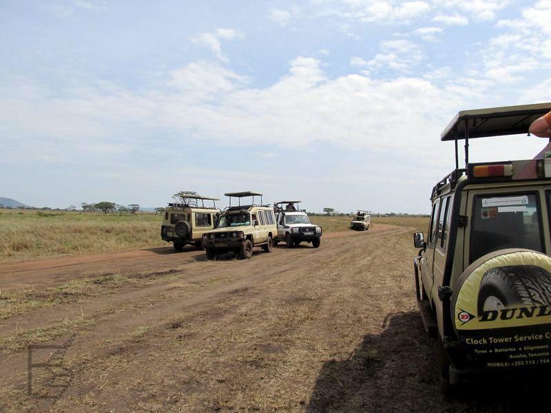 Serengeti i samochody na safari