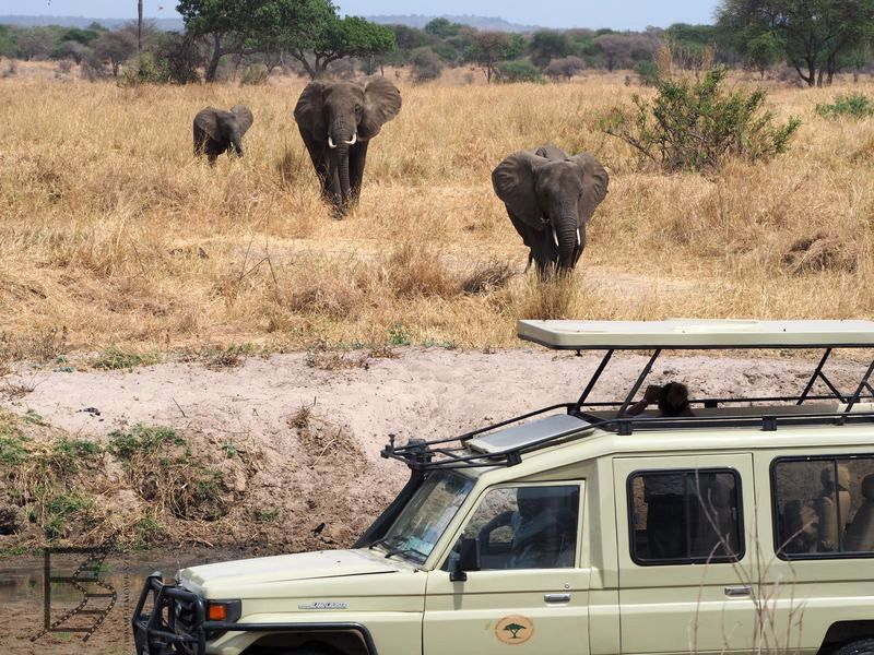 Słonie w Tarangire (safari w Tanzanii)
