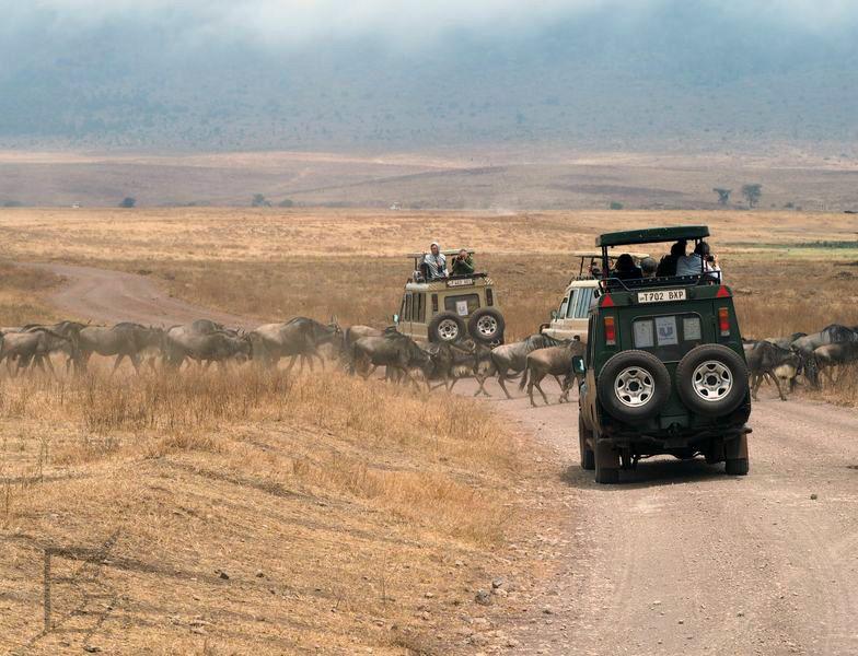 Gnu w Ngorongoro (Safari, Tanzania)