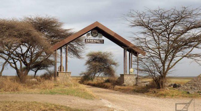 Park Narodowy Serengeti, czyli safari w Tanzanii