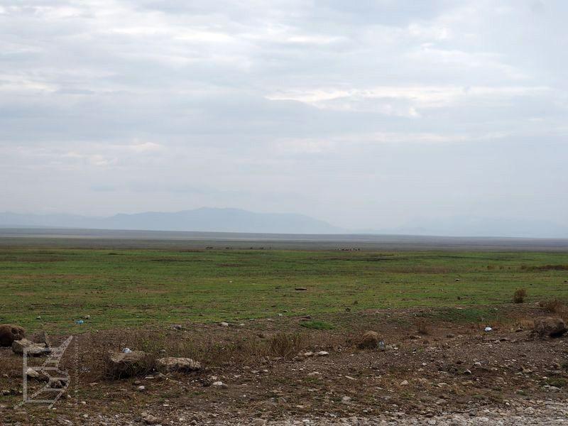 Wielka trawiasta równina Serengeti