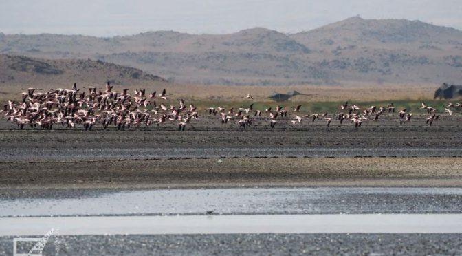 Jezioro Natron w Tanzanii, zabójcze i przepiękne