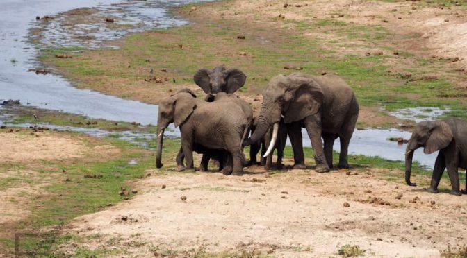 Park Narodowy Tarangire, tanzańskie safari