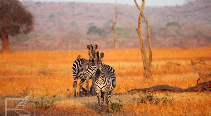 Tanzania: Relacja i podsumowanie